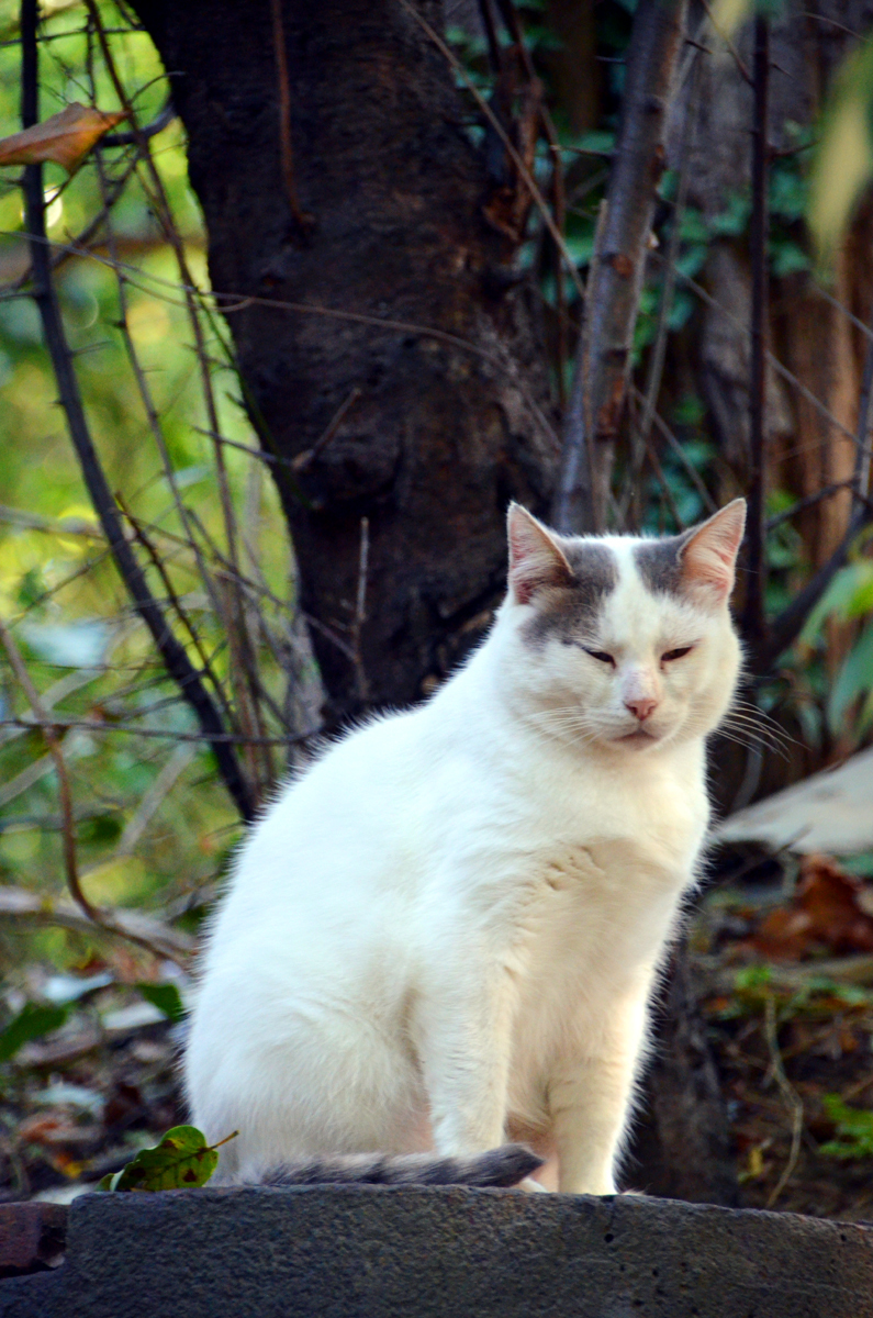 5. Сочинский кот. Наверное он спит.