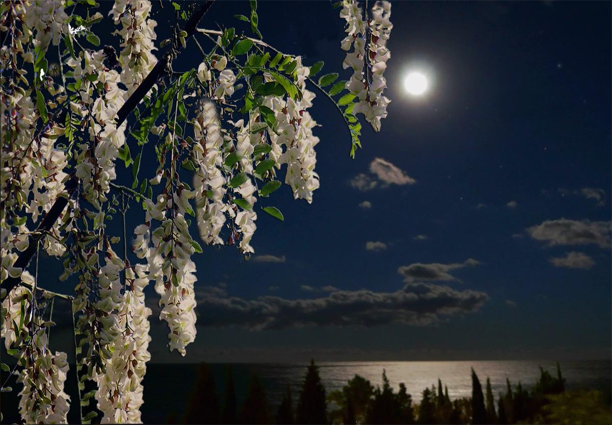 любил, фото весны луна этом разделе
