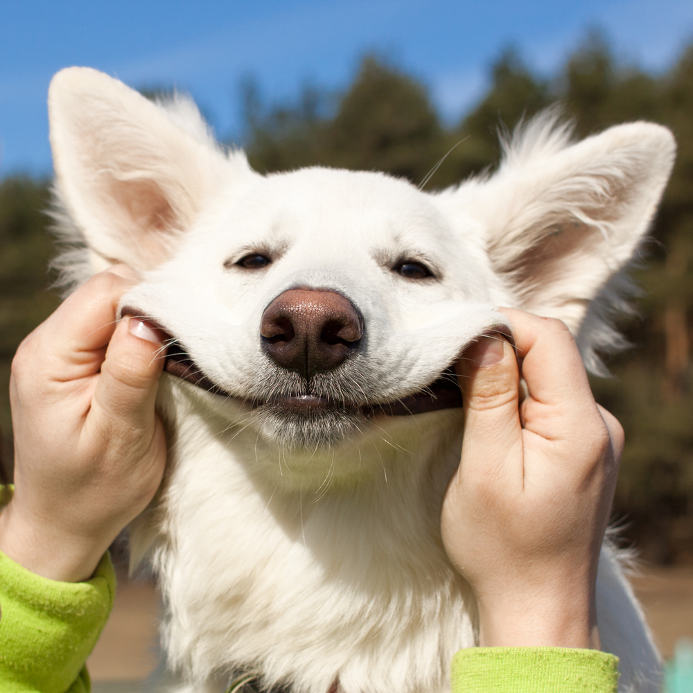 ноябрьске клиенты улыбнись картинки прикольные смешные получается