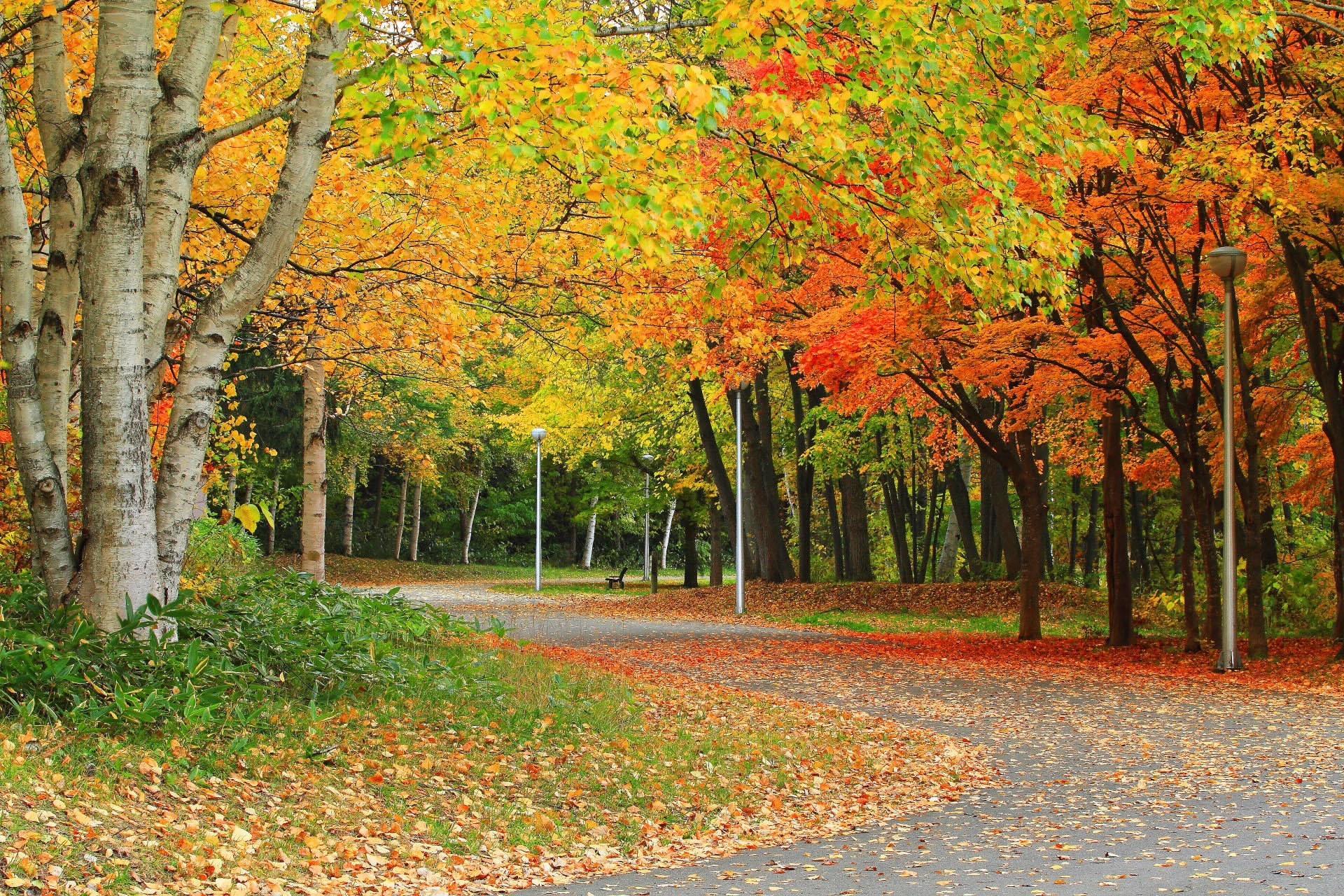 Картинки золотая осень фото, приколы примирение картинки